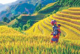 VIETNAM Y CAMBODIA YOGA TOUR