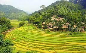 VIETNAM CON PU LUONG